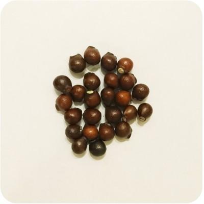 Семена клекачки (25 шт.)